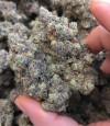cannabiscomunity