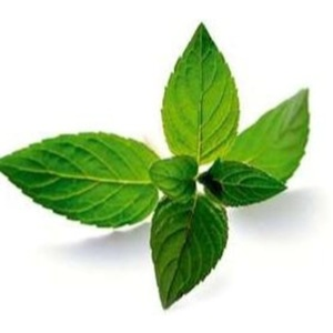 Manufacturer of 100% Pure and Fresh Mentha Piperita Essential Oil