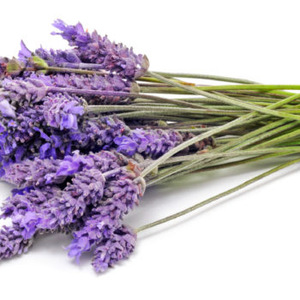 High Quality Lavender Essential Oil Bulk / Lavender Oil