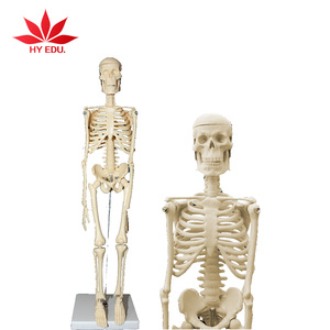 Hot selling for Medical educational supply 45cm human skeleton model