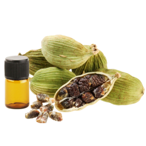 Manufacturer of top grade  100% Pure and Natural Cardamom Essential Oil