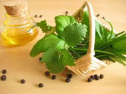 BASIL OIL 100% PURE
