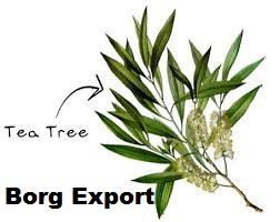 100% Natural Tea Tree essential Oil/Tea Tree Oil from BORG