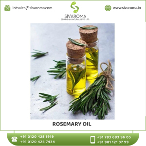 Superlative Quality  RoseMary Essential Oil in Bulk