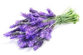100% Pure Natural Lavender Hydrosol (Floral Water)
