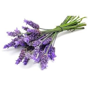 Professional Make Natural Lavender Hydrosol