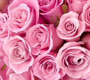 Rose Hydrosol (Damask)