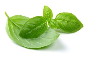 100% Pure Natural Basil Hydrosol